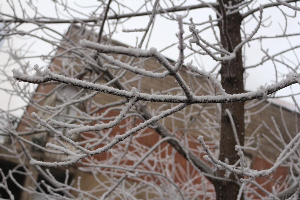 Ağrı'da kırağı tutan ağaçlar büyüledi galerisi resim 2