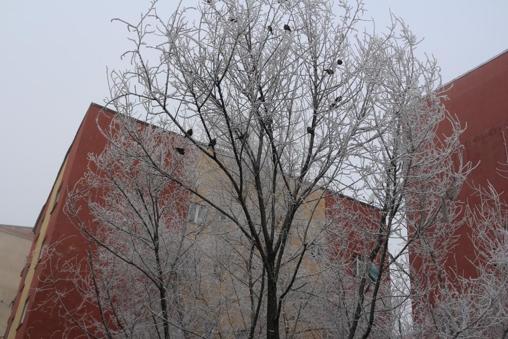 Ağrı'da kırağı tutan ağaçlar büyüledi galerisi resim 6