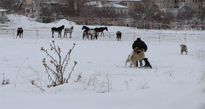 Nevşehir'de Köpek İçin Canını Yoksaydı