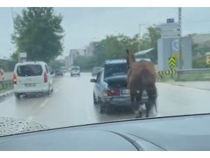 Bursa'da aracın arkasına at bağlayıp çevre yolunda koşturdu