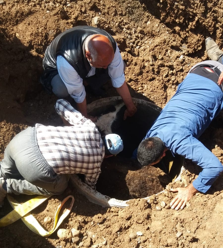 Ağrı'da Kuyuya Düşen Dana İtfaiye Ekipleri Tarafından Kurtuldu