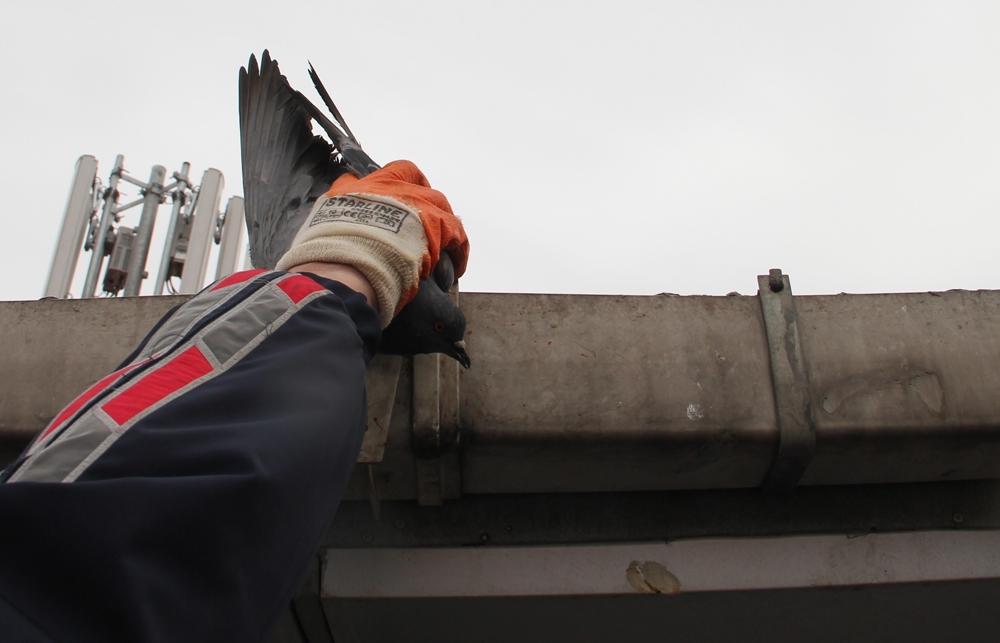 Çatıda mahsur kalan güvercini itfaiye ekipleri kurtardı
