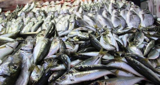 Balık fiyatı zirveyi gördü