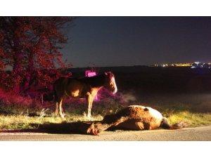 Telef olan arkadaşının yanından ayrılmayan at yürekleri burktu