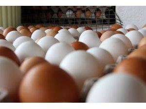 Tavuk yumurtası üretimi Ekim'de arttı