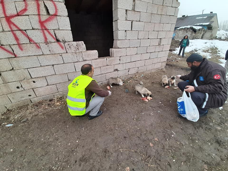 Ağrı'da sokak hayvanlarını unutmadılar