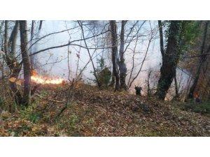 Ayancık'ta orman yangını