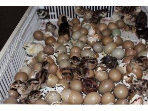 2019'da yaklaşık 100 bin kanatlı yetiştirilerek doğaya salındı