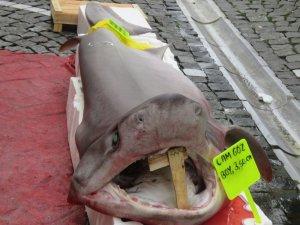 Marmara'da yakalandı: 3.5 metre boyunda, 120 kilo ağırlığında
