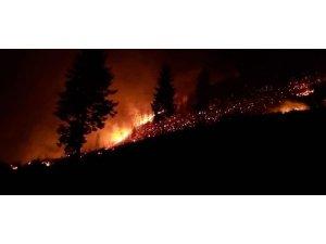 Trabzon'da çıkan orman yangınları ile ilgili Valilik'ten açıklama yapıldı