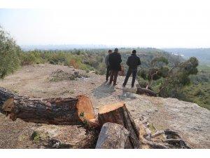 Mersin'deki ağaç katliamıyla ilgili 1 tutuklama