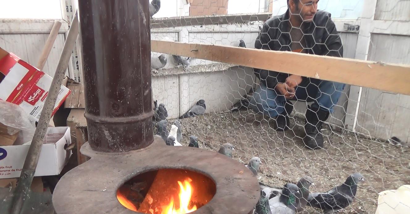 Ağrı'da güvercinler soba ile korunuyor