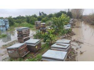 Bingöl'den arılarını soğuktan kaçırdılar, Adana'da sele yakalandılar