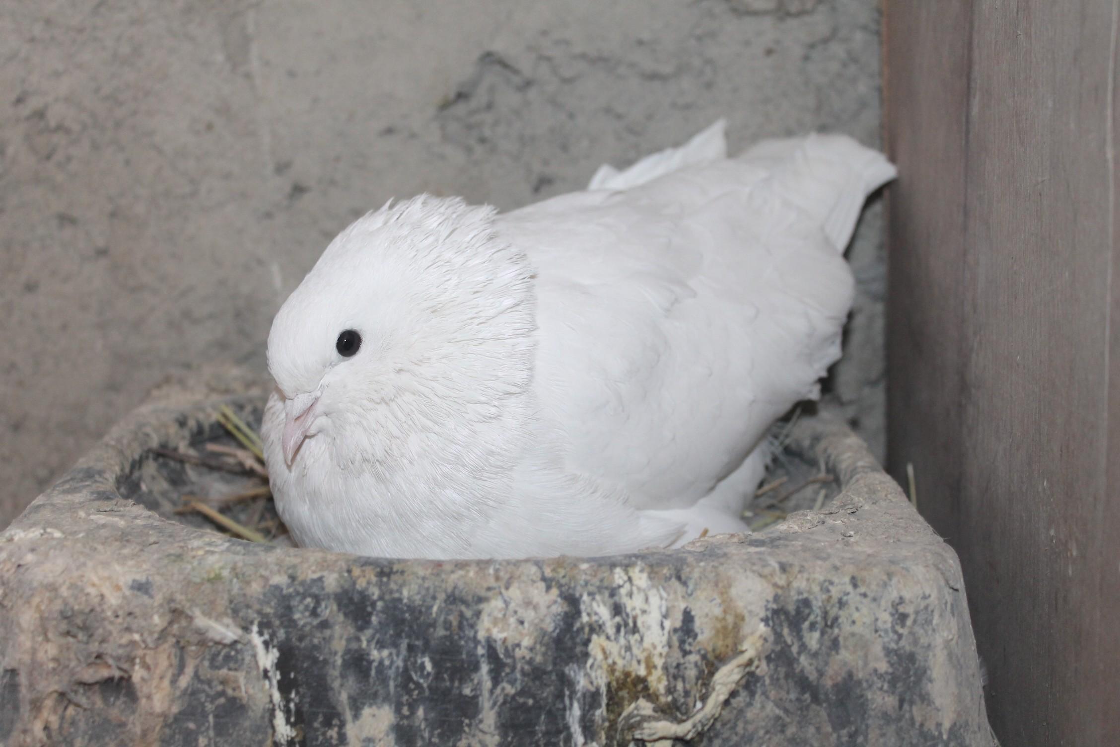 Ağrı'da güvercinlerini soğuktan elektrikli sobalarla koruyorlar