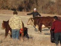 Ağrı'dan yola çıkan tır kaza yaptı, tırda bulunan hayvanlar yola savruldu