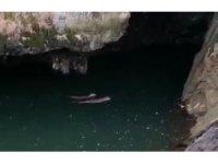 Koruma altında bulunan samurların yüzme keyfi