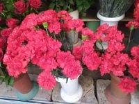 Çiçekçilerde 8 Mart bereketi: Erken saatlerde 'karanfiller' tükendi