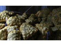 Toprak Mahsulleri Ofisi, patates alımını sürdürüyor, çiftçiler durumdan memnun