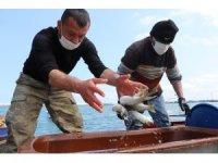 Balık sezonuna iklim değişikliği etkisi