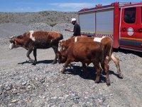 Ağrı'da çamura saplanan inekleri itfaiye kurtardı