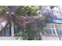 Kartal'da asırlık ağaç iş yerinin çatısına devrildi