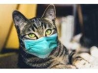 KKTC'de evcil kedi sahibinden COVID-19 kaptı