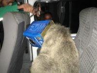 Ağrı'da ayı kurtarma operasyonu