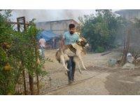"""""""Afet bölgelerinde ilk yardımı mutlaka görevli veteriner uygulamalı"""""""