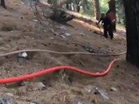 Orman yangını bölgesinde 'bizim sırtımız yere gelmez' dedirten görüntü
