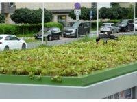 """Polonya'da otobüs duraklarının çatılarına """"mini bahçe"""" yapıldı"""
