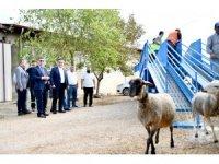 Mobil koyun banyosu çobanların ve koyunların hizmetinde