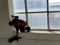 Ağrı Eğitim ve Araştırma Hastanesinde kedi kurtarma operasyonu