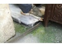 Kış uykusuna yatmayan yılan eve girdi, herkes evi boşalttı