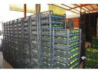Alanya'dan Ukrayna'ya 3.5 ton avokado ihracatı