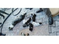 Barınakta 20 köpek ölüsü bulan hayvanseverler şoke oldu