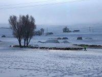 Ağrı'da besicilerin zorlu kış mücadelesi