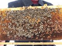 4 aydır kar altında bekletilen arılar telef oldu
