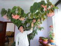 Eşinin hatırasını yaşatmak için gözü gibi baktığı çiçek bütün odayı kapladı