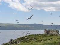 Ağrı Balık Gölü Doğal Sit-Nitelikli Doğal Koruma Alanı oldu