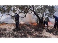Erdek'te 20 dönüm zeytinlik yandı