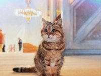 Ayasofya'nın kedisi Gli'ye izolasyon