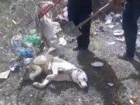 Ayağı Tellere Sıkışan köpek İtfaiye Ekiplerince Kurtarıldı