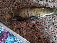 Ağrı'nın soğuğunda hasta annesi için balık avına çıktı