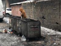 Çöpler dağılmasın diye çöp konteynerinin içine giriyor!