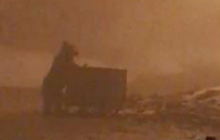 Aç kalan ayı, çöp konteynırında yiyecek aradı