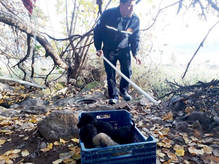 Kuyuya düşen yavruları itfaiye kurtardı