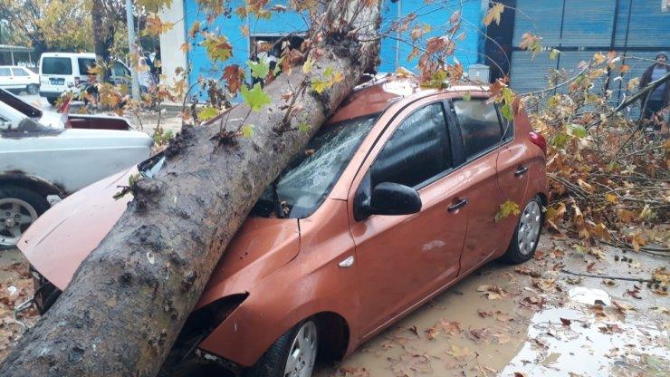 Fırtınanın devirdiği ağaç otomobili hurdaya çevirdi