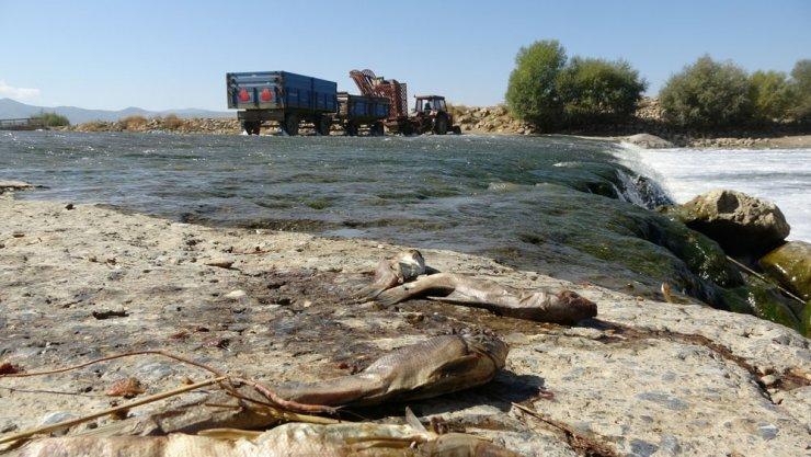 Muş'ta balık ölümleri tedirgin etti